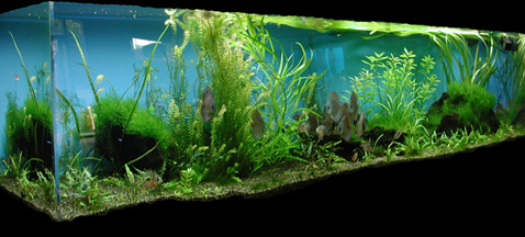 Leman russ battle tank  sponsons likewise Stock Photos Paper Factory Image28307513 as well Liquid Cryogenic 5400 Gallon Iso Containers further Ultrasonic Level Measurement Benefits furthermore Low Tech Planted Aquarium. on carbon dioxide tank