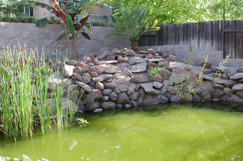 Aquaworld aquarium article pondering a pond for Green water in pond