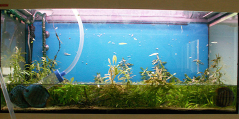 Aquaworld aquarium article water changes how much for Why is my fish tank water cloudy