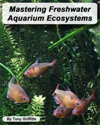 Mastering Freshwater Aquarium Ecosystems