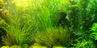 Anaerobic Bacteria in Freshwater Aquariums - The Often Incorrectly Vilified Beneficial Bacteria