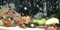 Marine Reef Aquariums Made Easy